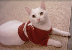 Feline Longhorns fan.