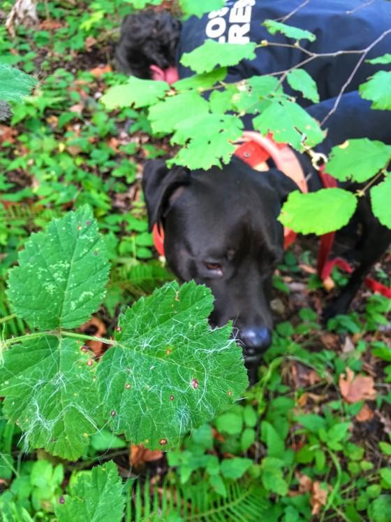 Cat detection dog
